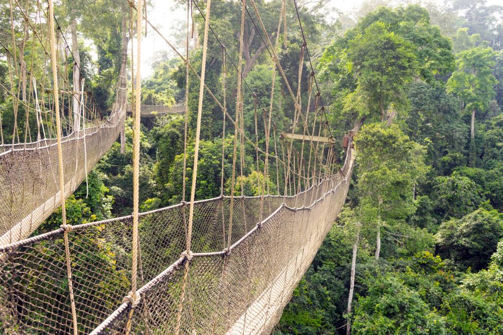 01-Kakum-Canopy-Walk-DSC06000